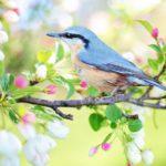UPOZNAJTE NJIHOV SVET: Onlajn kurs povodom Evropskog dana posmatranja ptica!