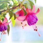 GAJENJE CVEĆA: Najbolji saveti za vaš prolećni balkon!