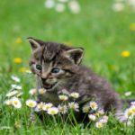 NEPOGREŠIVA INTUICIJA: Ako mačke ko nanjuše negativnu energiju ili uoče toksične ljude u vašem okuženju, uradiće ovo!