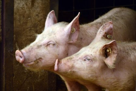 ZORAN ERIĆ: Bagatelne cene će nas uništiti, stočarstvu preti veliki krah!