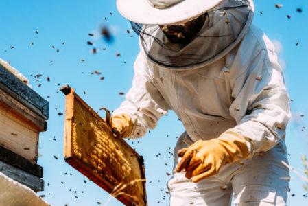 IDEJA ZA DOBRU ZARADU: Pčelarstvo iz hobija prerasta u unosan posao!