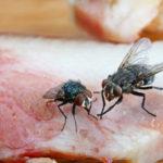 GROZNA ISTINA: Evo šta se dešava kada muva sleti na hranu, mnogo je gore nego što mislite!