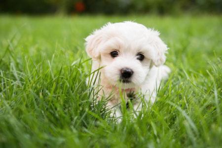 OVO SU ZNACI DA MU NEDOSTAJE SAN: Koliko pas treba da spava?