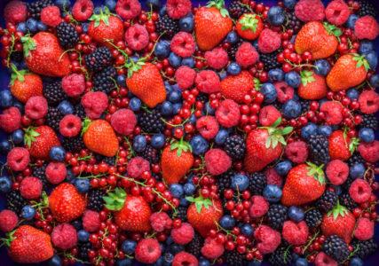 ZARADA I DO 100 EURA DNEVNO: Branje šumskih plodova je veoma isplativ posao!