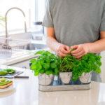 IZBACITE PESTICIDE IZ UPOTREBE: Soda bikarbona je spas za vaše biljke!