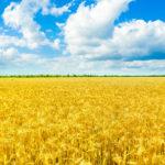 VLADA SRBIJE DONELA UREDBU: Daje se državno zemljište u zakup, evo koji su uslovi!