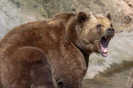 JEZIVA ISPOVEST KAMPERA: Kidao mu je i glodao telo, gledali smo kako nam medved proždire prijatelja!