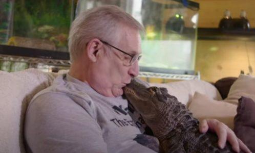 PREDATOR KAO KUĆNI LJUBIMAC: Penzioner iz amerike gaji aligator koji je pitomiji od mačke! (VIDEO)