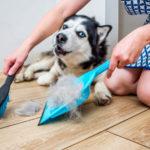 PRAKTIČNI SAVETI: Kako najlakše očistiti dlake od kućnih ljubimaca!