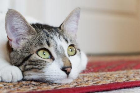 VEČITO PITANJE: Zašto se mačkama dešava da gledaju u prazne zidove?