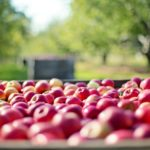JABUKE OBARAJU HOLESTEROL: Ako vam ne prija sirće, evo koliko jabuka treba da jedete da smanjite masnoću u krvi!