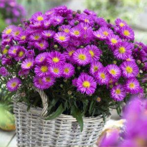 SAD JE PRAVO VREME ZA NJIH: Zasadite ove 3 biljke, cvetaće do snega