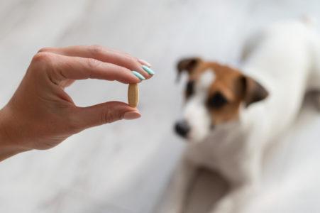 SAVETI VETERINARA: 8 načina kako da prevarite svoje ljubimce da uzmu lekove!