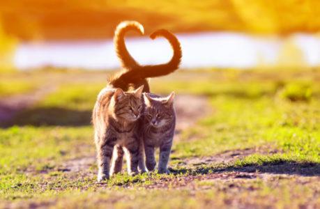 SAVRŠENO ĆETE IH RAZUMETI: Šta mačke položajem repa poručuju vlasniku?